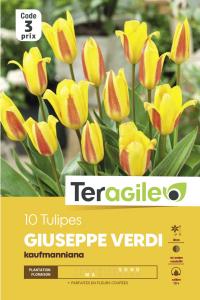 Tulipe johann strauss - Calibre 12/+ - X10