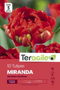 Tulipe double mirande - Calibre 10/11 -X10