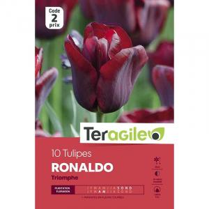 Tulipe ronaldo - Calibre 12/+ - X10