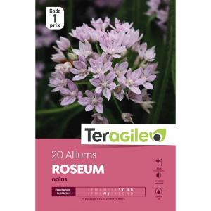 Allium nain roseum - Calibre 4/5 - X20
