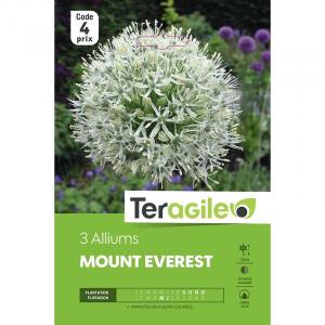 Allium mount everest - Calibre 18/20 - X 3