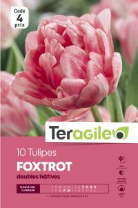 Tulipe double hative foxtrot - Calibre 12/+ - X10