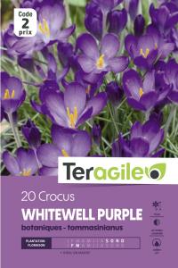 Crocus Bot. Whietwell Purple - Calibre 5/7 - x20