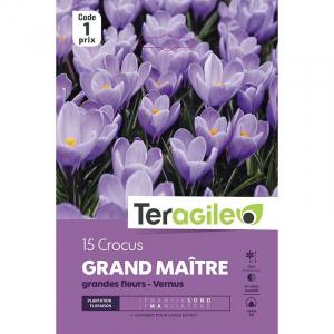 Crocus grandes fleurs grand maître - Calibre 7/8 - X15