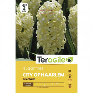 Jacinthe city of harlem - Calibre 16/17- X4