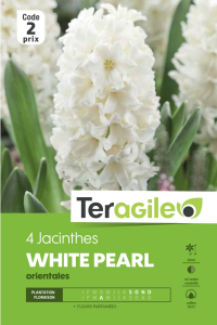 Jacinthe orientale White Pearl - Calibre 16/17 - X4