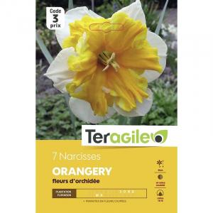 Narcisse orchidée oranger - Calibre 14/17 - X7