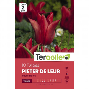 Tulipe pieter de leur - Fleurs de lys -Calibre 12/+ - X10