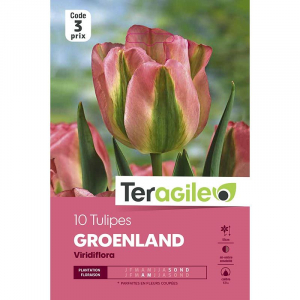Tulipe viridiflora groenland - Calibre 10/12 - X7