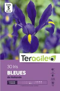 Iris de hollande bleu - Calibre 7/8 - X40