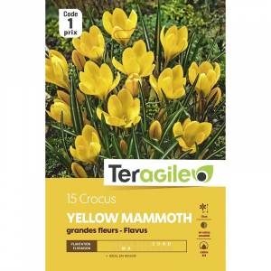 Crocus grandes fleurs yellow mammouth -Calibre 8/9 - X15