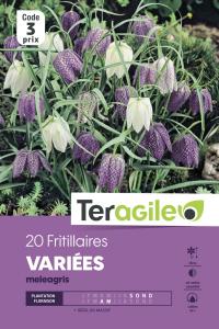Fritillaire méléagris - Variés - Calibre 6/+ - X20