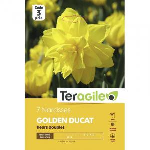 Narcisse golden ducat - Calibre 14/16 -X7