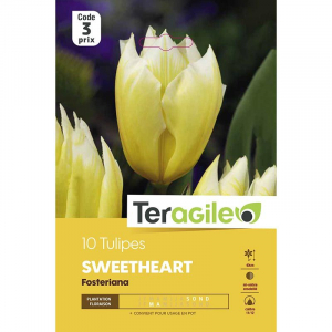 Tulipe sweet heart - Calibre 11/12 - X10