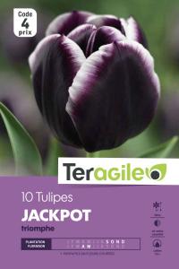Tulipe jackpot - Calibre 11/12 - X10