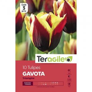 Tulipe gavota - Calibre 12/+ - X10