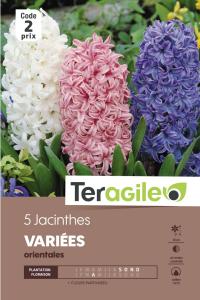 Jacinthe d'orient - Variés - Calibre 14/15 - X5