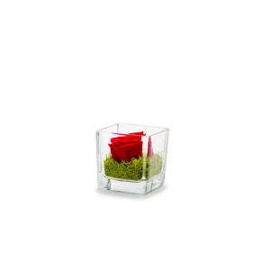 Rose stabilisée dans verrerie Genova - 6x6x6