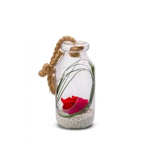 Rose stabilisée dans verrerie Bottle - L