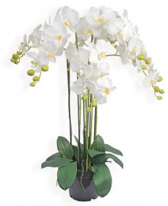 Pot Orchidées - Arche Diffusion - Blanc - 52 cm