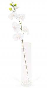 Phalaenopsis - Arche Diffusion - Blanc - 85 cm