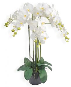 Pot orchidée - Arche Diffusion - Blanc - 90 cm