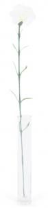Oeillet - Arche Diffusion - Blanc - 62 cm