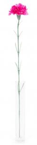 Oeillet - Arche Diffusion - Fuchsia - 62 cm
