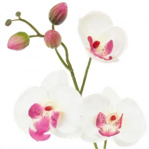 Phalaenopsis - Arche Diffusion - Blanc/Fuchsia - 85 cm