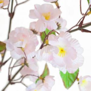 Cerisier - Arche Diffusion - Rose - 77 cm