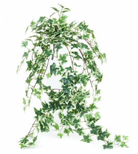 Chute de lierre - Arche Diffusion - Vert - 76 cm
