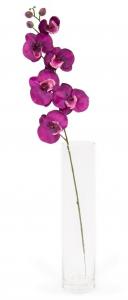 Phalaenopsis - Arche Diffusion - Fuchsia - 85 cm