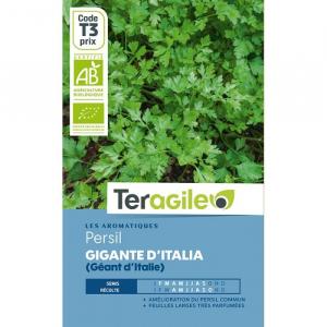 Persil géant d'Italie Bio - Graines - Teragile