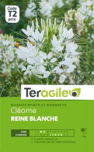 Cléome Reine blanche - Graines - Teragile