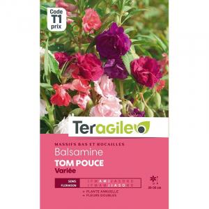 Balsamine Tom pouce - Graines - Teragile
