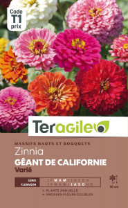 Zinnia Géant de Californie - Graines - Teragile