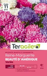 Reine-marguerite Beauté d'Amérique - Graines - Teragile