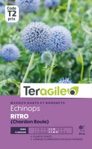 Echinops ritro (Chardon boule) - Graines - Teragile