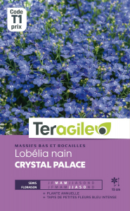 Lobelia nain Crystal palace - Graines -Teragile