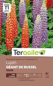 Lupin Géant de Russel - Graines - Teragile