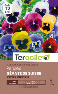 Pensée géante de Suisse - Graines - Teragile