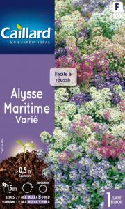 Alysson maritime variés - Caillard