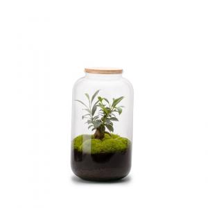 Bonbonne terrarium autonome Ginseng - M