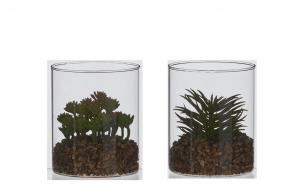 Plante succulente artificielle en pot en verre - 12cm