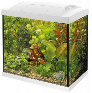 Aquarium en kit - Start 50 Tropical - Blanc