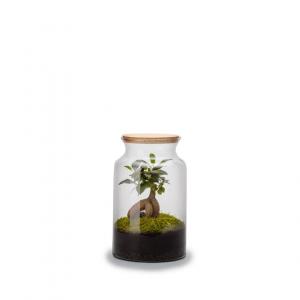 Terrarium jungle M ginseng - Hauteur 30cm