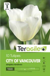 Tulipe simple city of vancouver - Calibre 12/+ - X10