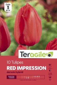 Tulipe darwin red impression - Calibre 12/+ - X10