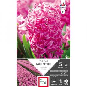 Jacinthe de bretagne pink pearl - Calibre 15/+ - X5