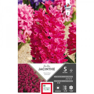 Jacinthe de bretagne jan bos - Calibre 15/+ - X5